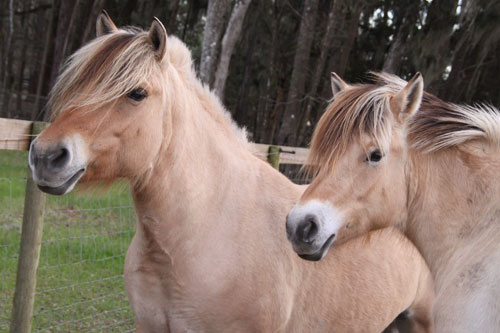 My heart's desire fulfilled by a little rescued mare and her daughter.