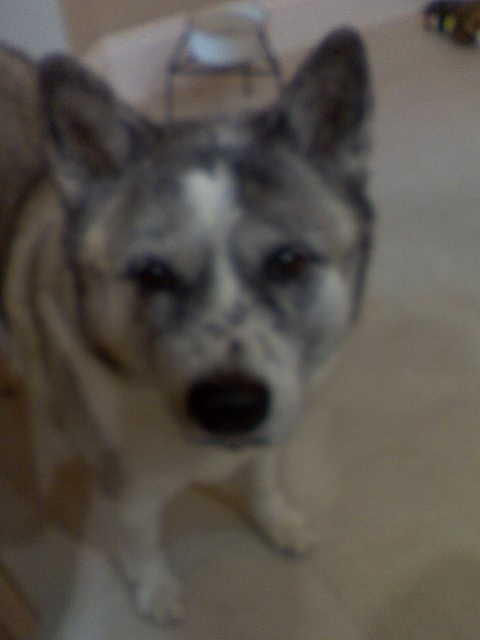Photo take w/bad cell phone but this is her sweet face.